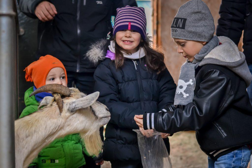 Appréciée des petits et des grands, visitez nos animaux de la ferme et de notre refuge en carriole.